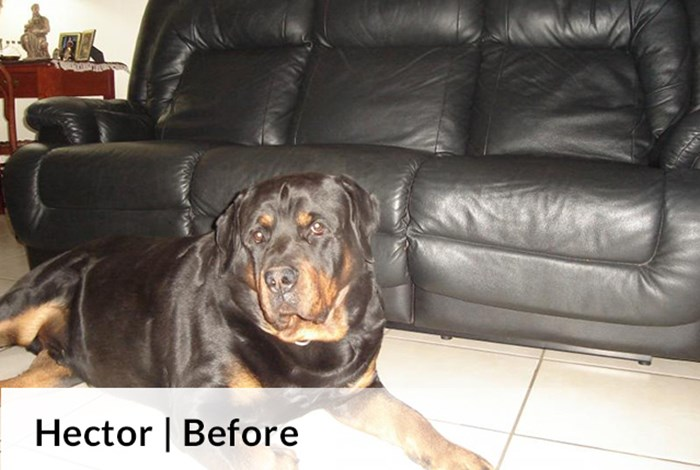 Hector | Before image