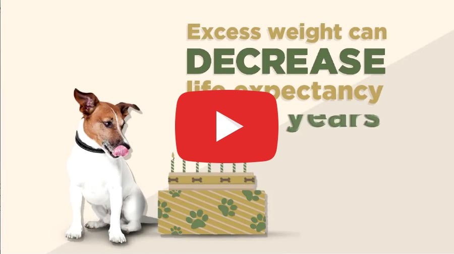 Pet Slimmer: Did you know? #5