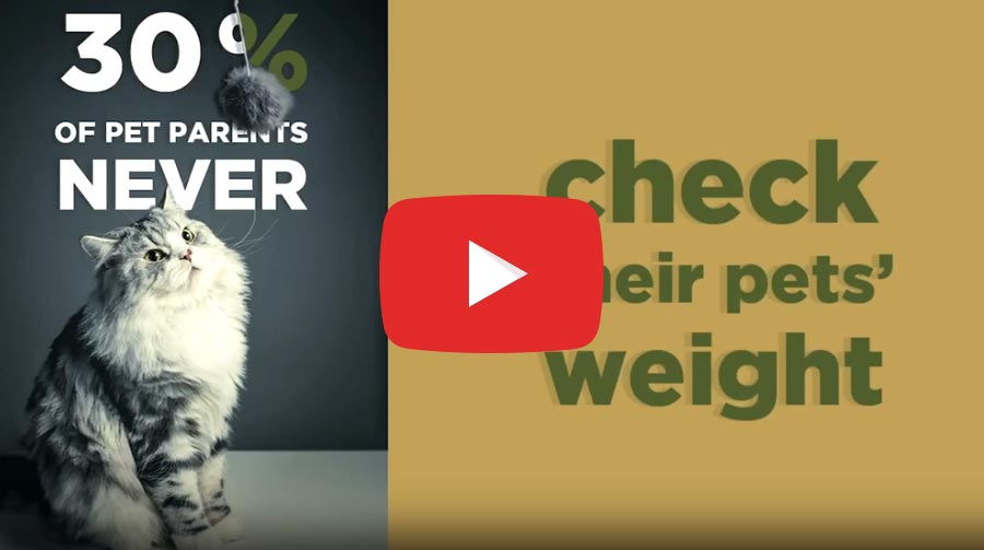 Pet Slimmer: Did you know? #3 placeholder image