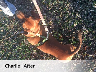 Charlie - progress 2