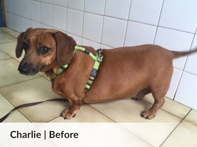 Charlie - progress 1